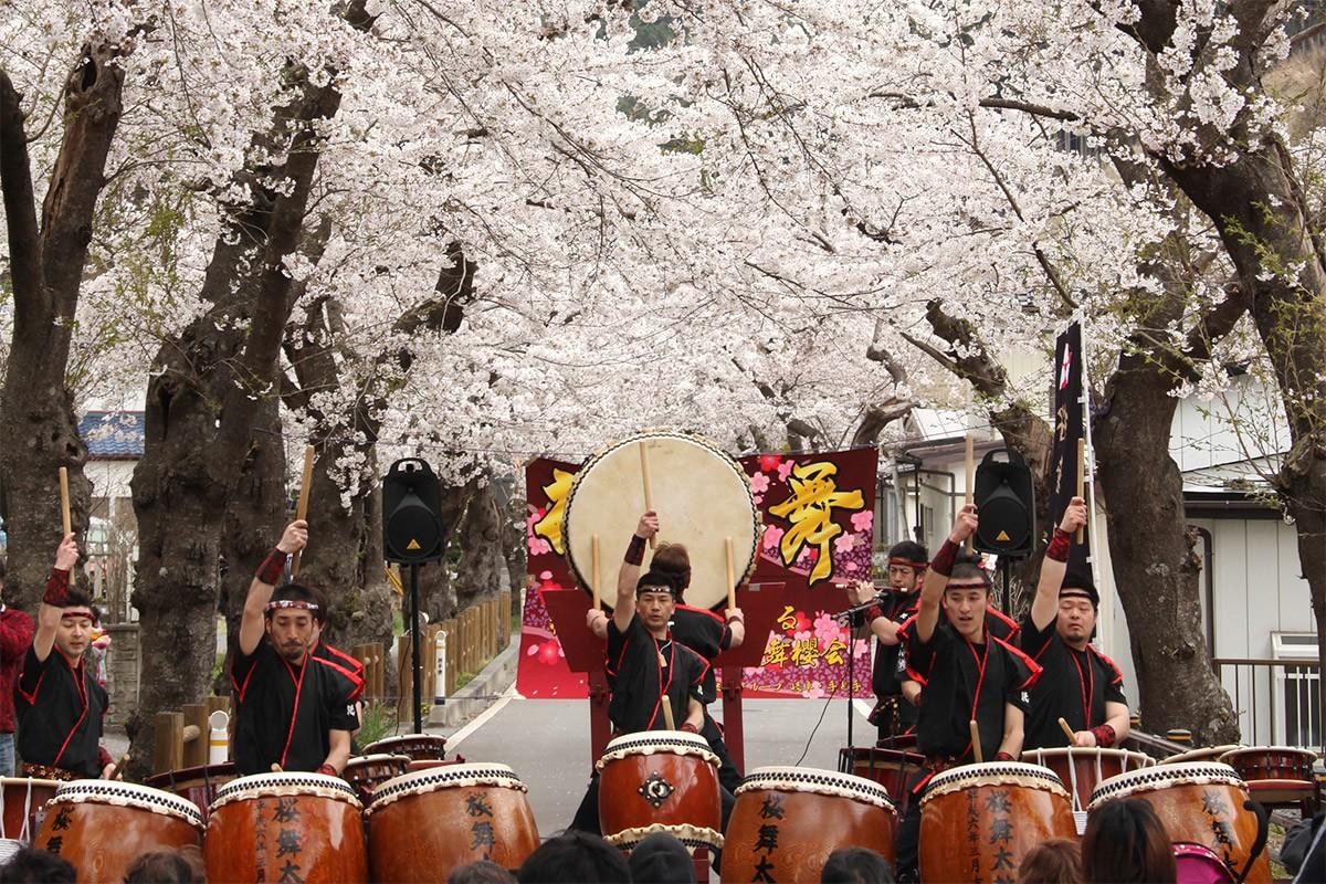 本郷の桜並木